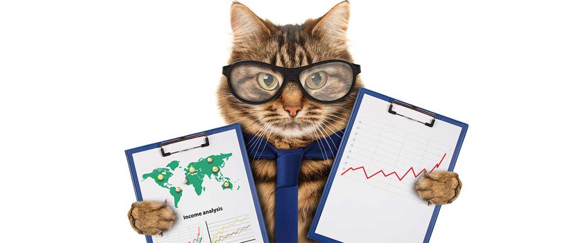 Cat Marketing Specialist