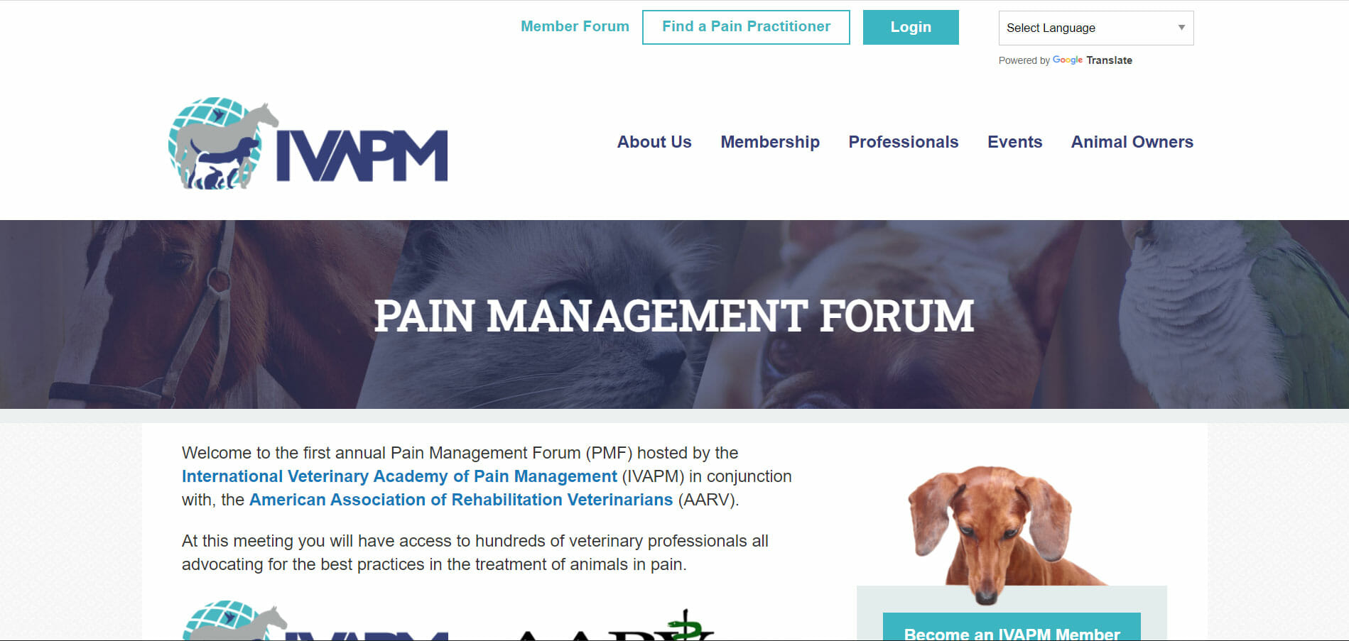 pain management forum